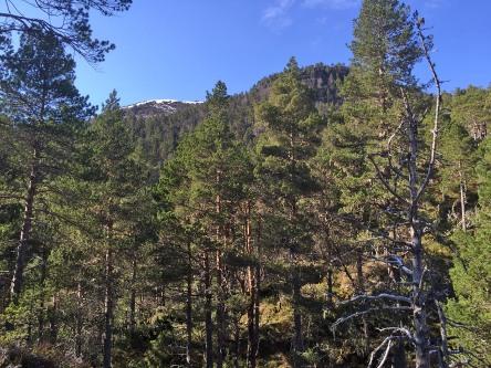Slightly steep forest