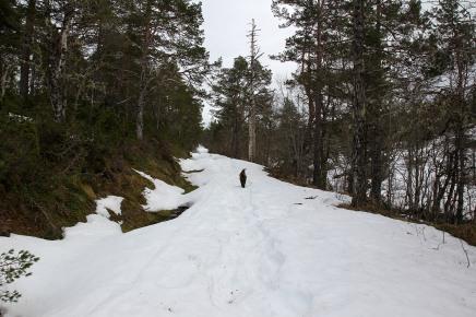 Strenuous ascent