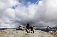 On Gjelsvikefjellet summit