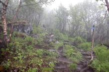 A foggy morning...