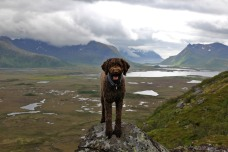 Karma - mountain dog!