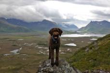 Karma - mountain dog!
