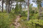 Nice path