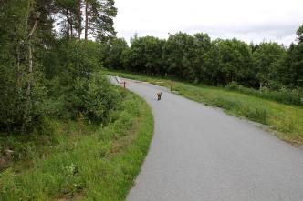 Back on the Sankthansholet road