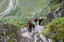 Karma - a real mountain dog!