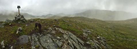 On top of Røddalshornet