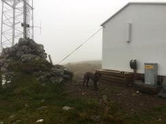 On top of Rjåhornet