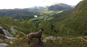 On the way down from Halvgjerda