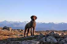 Karma - my loyal hiking friend