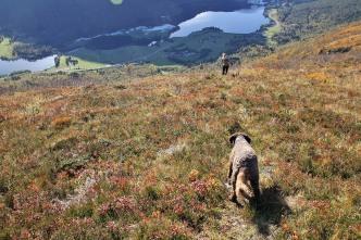 On the path towards Langvatn