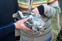 The poor owl