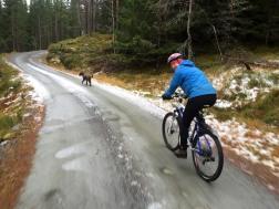 Biking the dog...