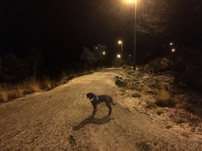 On the floodlit trail