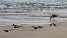 Birdlife on the beach