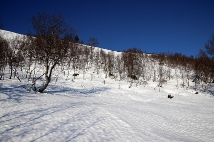 Some steep slopes with hard snow