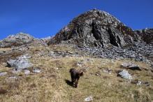 To the ridge