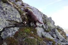 Karma - a real climber