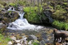 Nice path along the creek