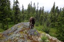 On top of Batnehov