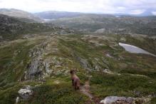 Descending Grottehovda