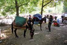 Poor mules...