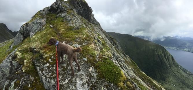 On the ridge to Bjørnastighornet