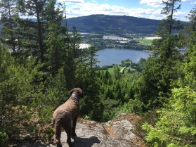 View towards Mistberget