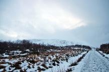 The road to Hammarstøylsvatnet