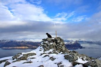 On top of Nystøylhornet
