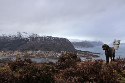On top of Hjørungneshornet