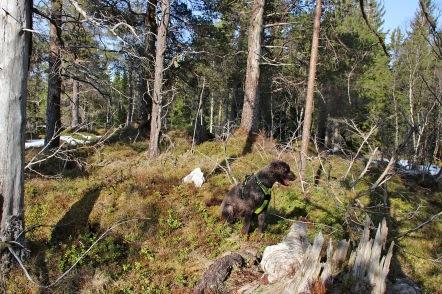 On top of Høghaugen