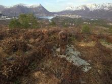 On top of Djupvikhaugen