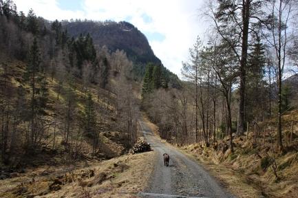 On the way to Øyra