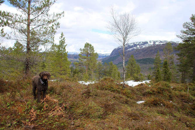 Karma on top of Solåsen