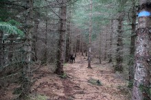 In the forest. Snow all around, but not here