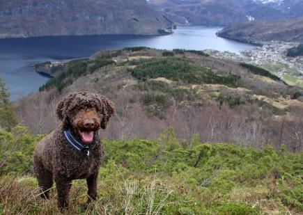 My loyal hiking mate