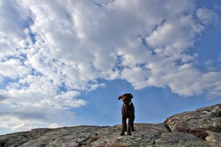 Nice dog, nice sky