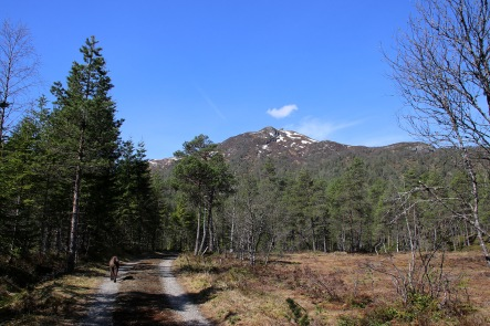 Hallbrendsnipa comes into view