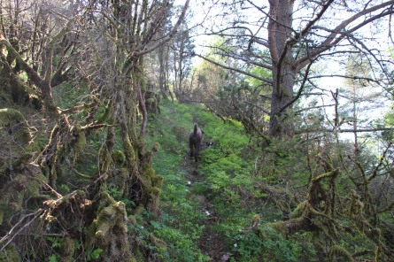 A narrow path up the forest