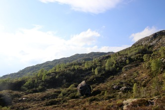 Bergsheia above