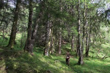 Nice forest!