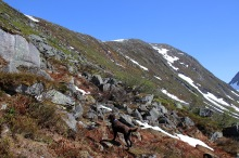 On the way up to the Langerusthornet - Mannefjellet ridge