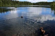 Karma took a swim. Turte just threaded the water