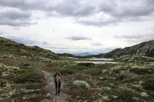 Between Vålåsjøberget and Fjellmillopiggen