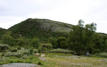 Closing in on Kåsen