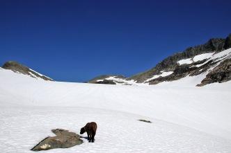 Across Blåbreden glacier