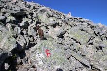Huge boulder field