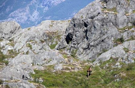 A fellow hiker...
