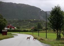 On my way from Brønnøysund