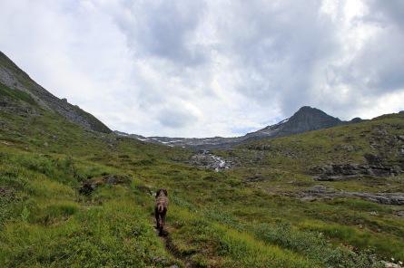 Up Kalvedalen